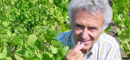 illustration Le beaujolais perd son ambassadeur